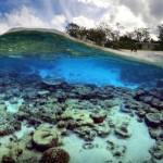 Ikan Ini Diprediksi Mampu Mengatasi Global Warming