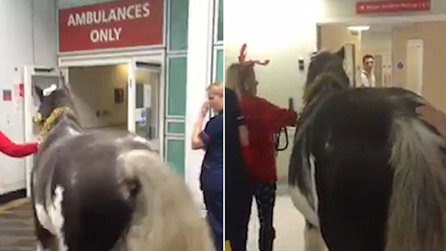 Pasien Rumah Sakit Ini Dijenguk oleh Seekor Kuda